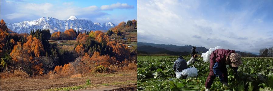 収穫中の写真