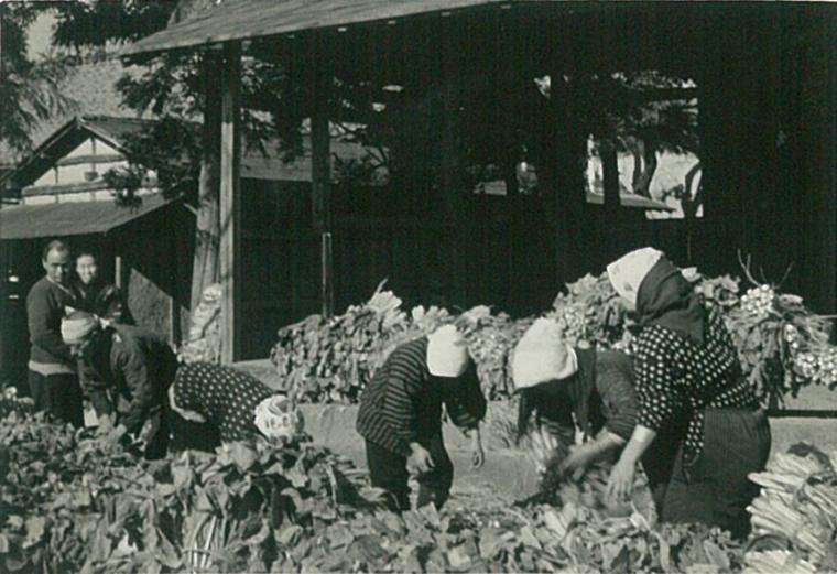 近くの神社での野沢菜漬の集荷作業風景